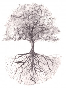 arbre-et-racine-03