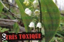 plantes toxiques_NEW_Muguet